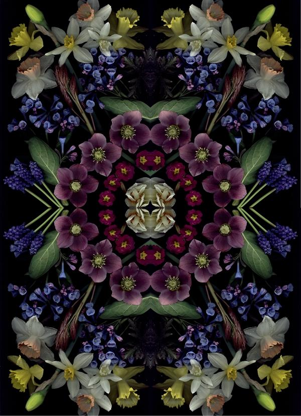 Craig Cramer bloom mandala2