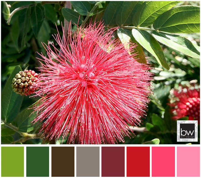 BW_ColourPallet_Fuchsia1