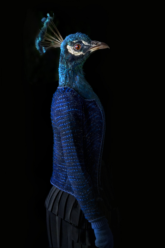 dressed animals Photographed by Miguel Vallinas2
