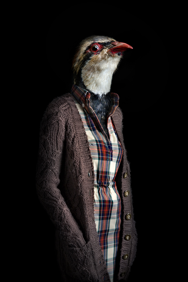 dressed animals Photographed by Miguel Vallinas 5