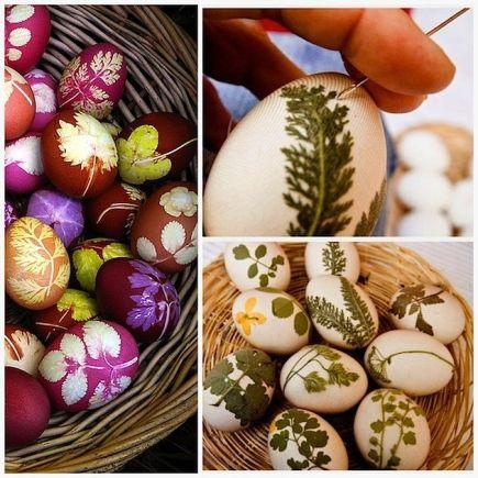 oestre eggs